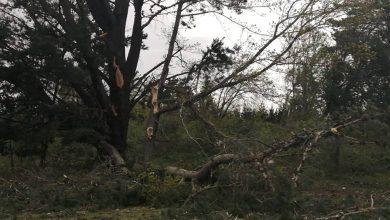 Photo of Fuerte viento puelche deja sin energía a clientes de Frontel en zonas cordilleranas