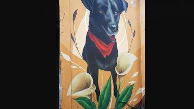 Photo of Graffitero levantó mural en honor al «Negro Matapaco» en Temuco