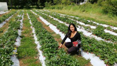 Photo of Joven de La Araucanía gana premio para innovar en la Región