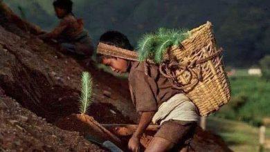 Photo of Niños indígenas replantando los cerros con árboles.