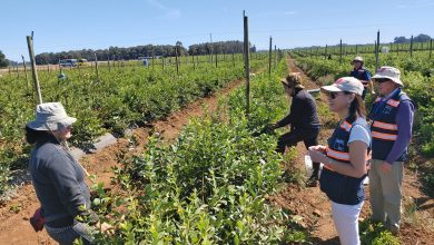 Photo of Seremi de Salud realiza Fiscalización a predio agrícola y entrega recomendación a trabajadores