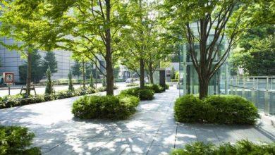 Photo of Las ciudades deben considerar tener árboles como infraestructura de salud pública