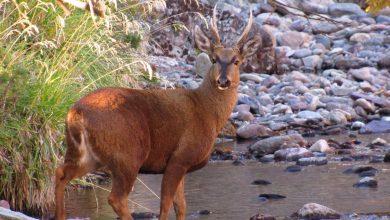Photo of Anuncian acciones legales tras hallazgo de 20 animales muertos en peligro de extinción en Villarrica