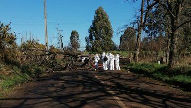 Photo of Motociclista murió al chocar contra árbol derribado en La Araucanía