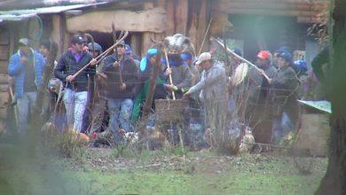 Photo of Machi Celestino Córdova es trasladado a su rewe para realizar ceremonia espiritual mapuche