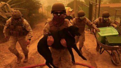 Photo of Incendios en Quilpué: Ejército desplegó a su personal para apoyar a la comunidad