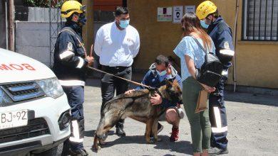 Photo of Militar protagoniza emotivo momento: Viajó a Temuco a homenajear al perro de Bomberos que halló los restos de su madre