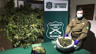 Photo of Carabineros incauta más de 3 kilos de droga en Pitrufquén
