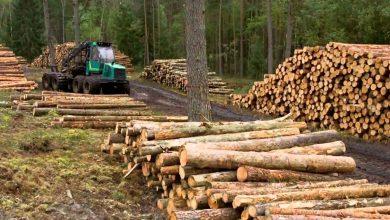 Photo of Decreto Ley 701: El Financiamiento del Estado a las Forestales y el conflicto con el deterioro de tierras en el sur de Chile