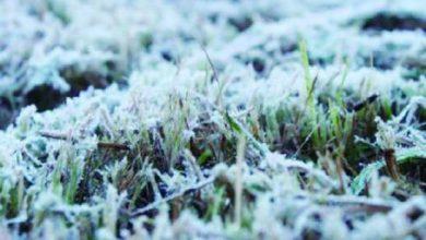 Photo of Lonquimay marca su temperatura más baja en lo que va del año con -8.3°