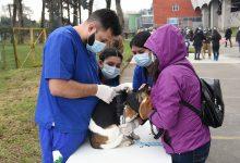Photo of Con éxito se desarrolla operativo de vacunación, desparasitación e implantación de microchip para mascotas en Temuco