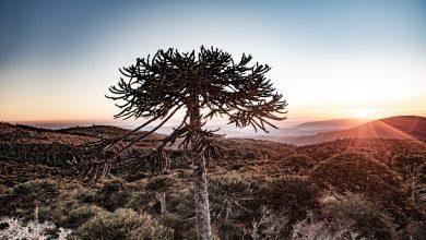 Photo of Nahuelbuta apuesta por estar dentro de los 100 destinos sostenibles del planeta