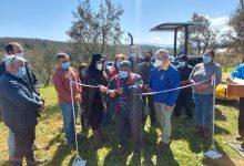 Photo of CONADI apoya producción de olivos más australes del mundo en comunidad mapuche de Los Sauces
