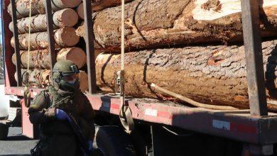 Photo of Carabineros incautan 5 camiones con carga y detienen a sus conductores por hurto de madera en Victoria y Angol